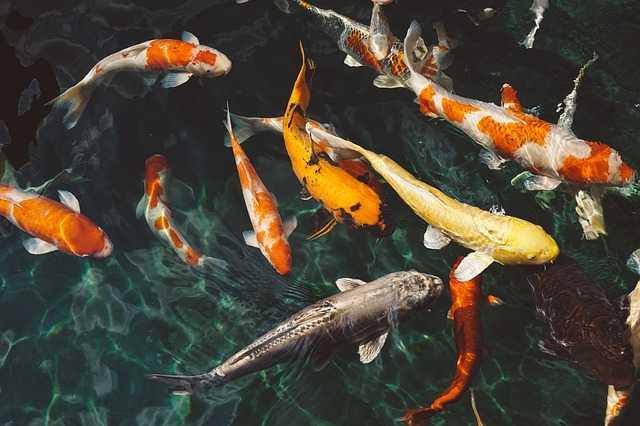 b12-halakban
